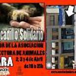 Mercadillo en Segovia a favor de los gatos abandonados
