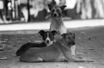 Primera Jornada del Perro en M�laga